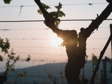 #videoproduction in #italy #scriani #wine #grapes #sunset